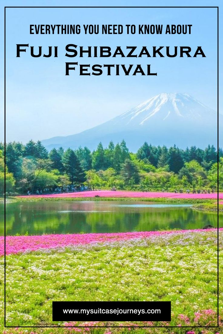 Everything you need to know about Japan's Fuji Shibazakura pink moss Festival.