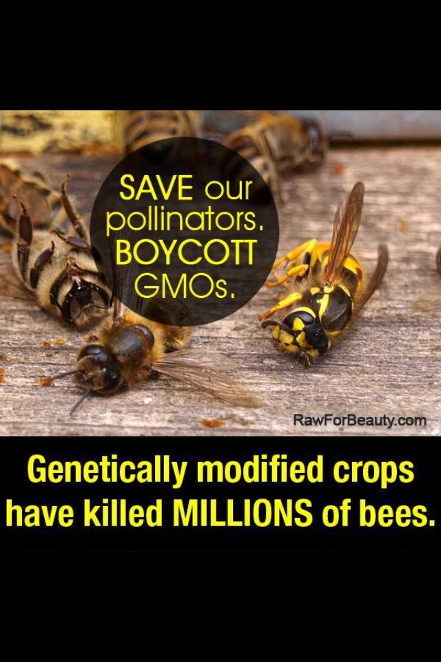 Best ideas about save the bees on pinterest