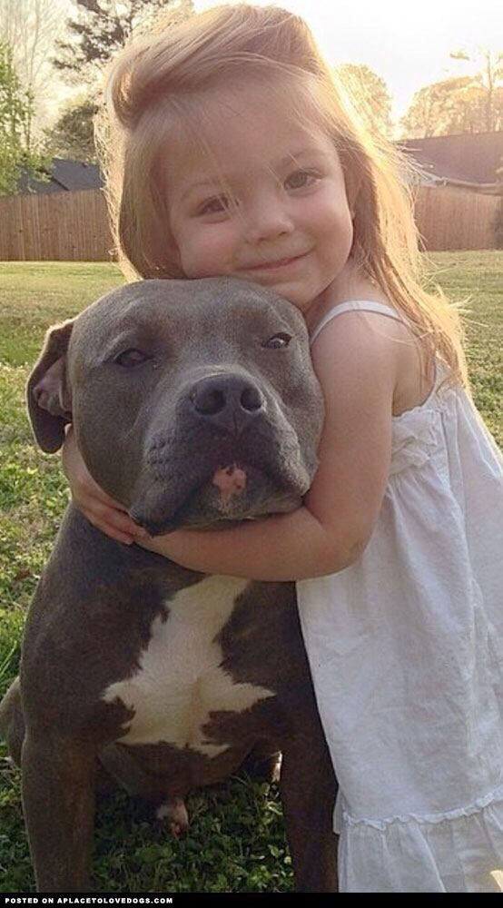 I just love this picture!  #pitbull #lovemypitbull