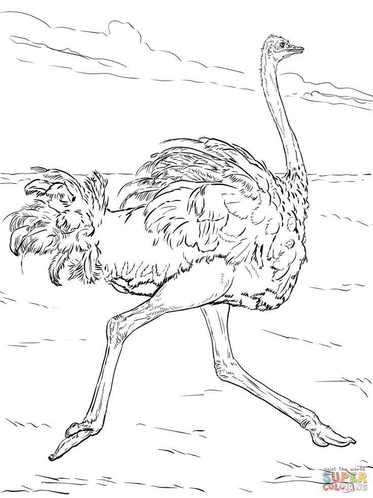 find this pin and more on kids entertainment by hanakobes ostrich coloring pages printable