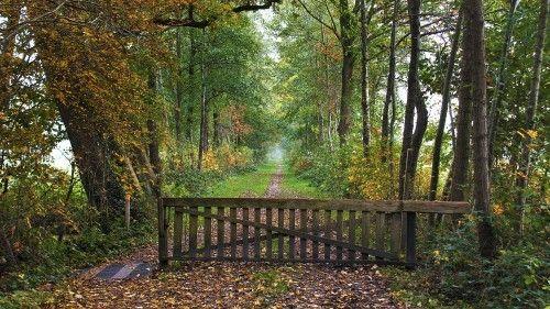 Niebert - Iwema-Steenhuis pad