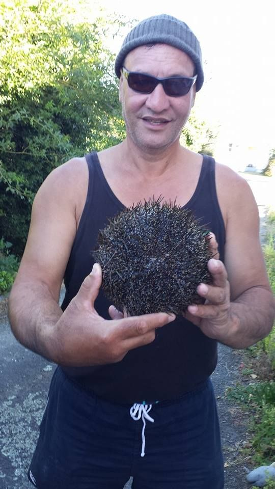 Dennis Karatea..Diving out to sea by the Whangaroa Harbour Huge Kina...Sea Urchin a delicacy..