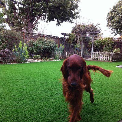 No mowing, watering, applying insecticides, holes dug or urine stains with a SYNLawn synthetic pet friendly yard. Http://synlawnvancouver.ca