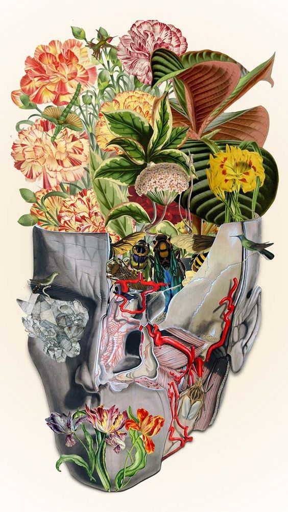 50 best Collages Anatómicos images on Pinterest | Kollagen, Anatomie ...