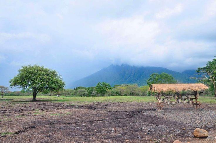 Pengen ngrasain suasana Padang Savana Dengan satwa satwa liarnya ? Nggak usah jauh jauh ke Afrika karena di Indonesia pun ada. Tepatnya di Taman Nasional Baluran, Situbondo. Ada banyak jenis satwa liar yang ada disini itulah kenapa Taman Nasional Baluran disebut Africa Van Java