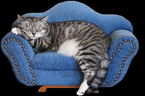die besten 25 au engehege f r katzen ideen auf pinterest. Black Bedroom Furniture Sets. Home Design Ideas