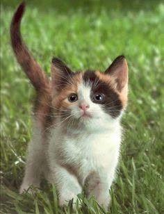 Pets Mania: Top cute pets