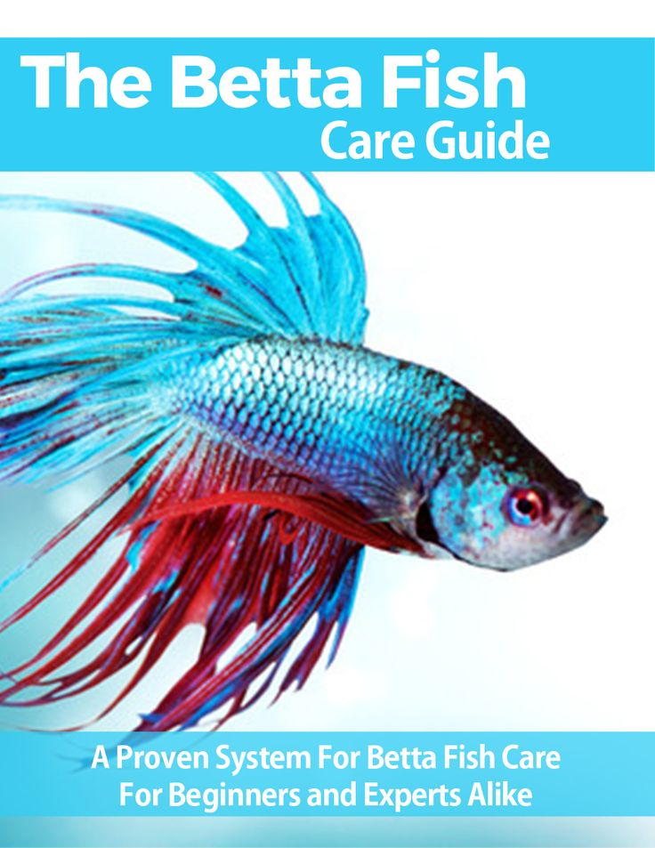 De 25 bedste id er om bettatank p pinterest betta og for Betta fish care guide