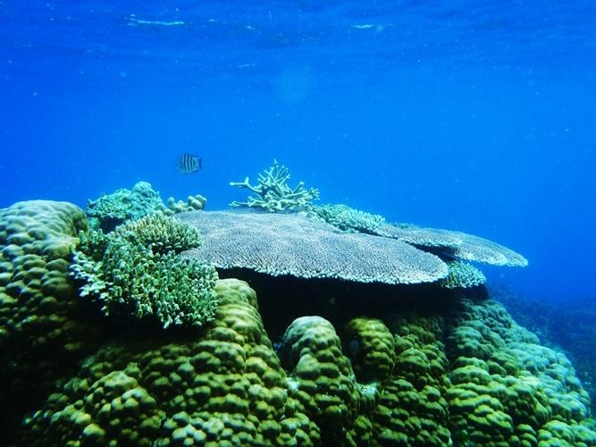 under water view, Karimun Jawa Island, Indonesia.