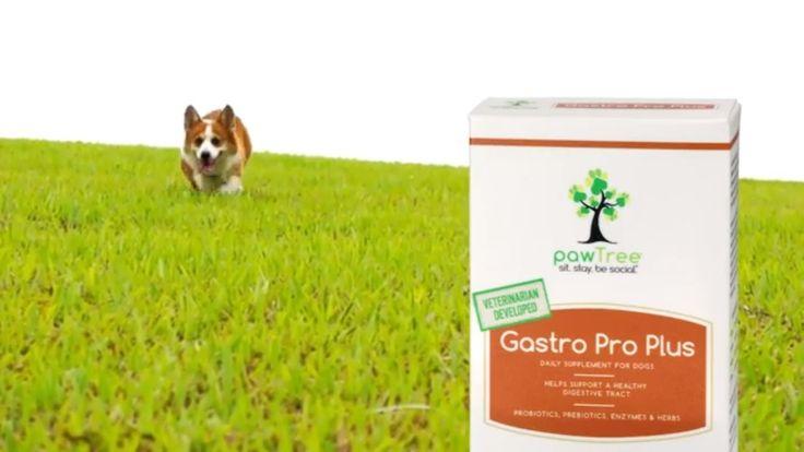 Gastro pro plus pawtree animal nutrition dog food recipes