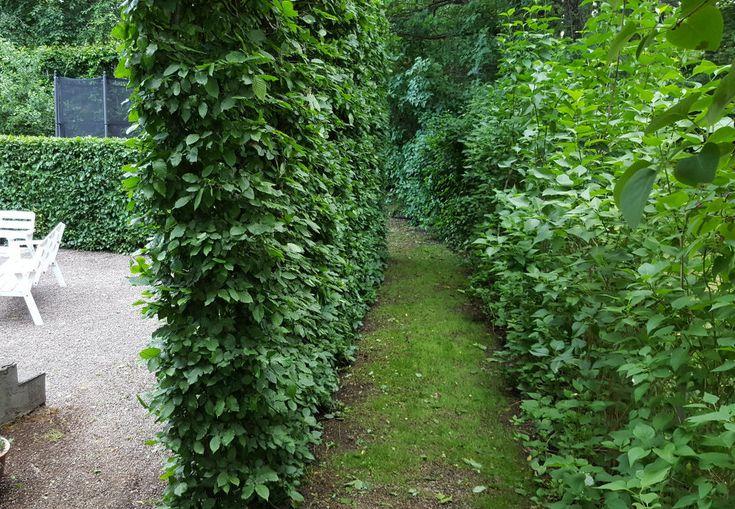 Säljarbild - Skyddat drömboende med vacker inramning och spännande trädgårdsrum