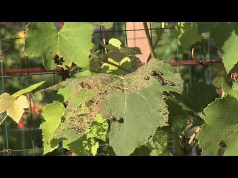 how to keep bugs from eating my vegetable garden