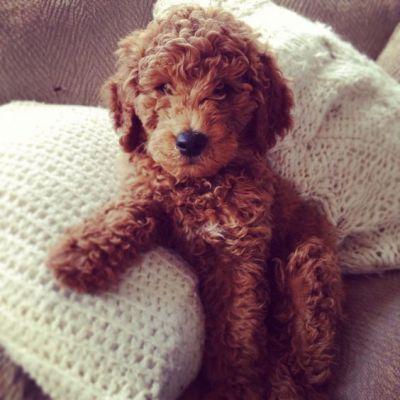 Az állatoknak is szükségük lehet egy kis fazonigazításra. #kutyakozmetikus #tanfolyam #okj https://plus.google.com/+TanfolyamokjHuKepzesek/posts/EGdeYY3y4wK