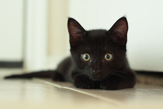 Black kittens and cats are my favorites! I'm pretty keen on tabbies too.
