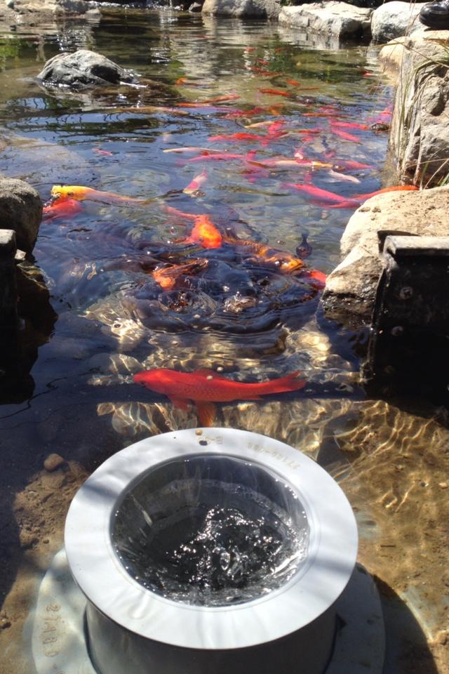 The helix fish safe pond skimmer koi ponds pinterest for Koi pond skimmer