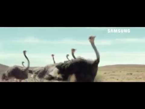 Anuncio Samsung (2017) El avestruz que quiso volar