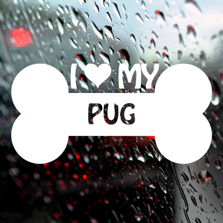 Best Dog Decals Images On Pinterest Boxers Vinyl Decals And - Vinyl decals for my car
