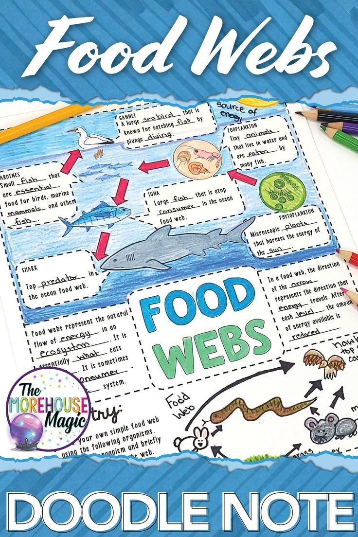 Food Webs Doodle Notes Science Doodle Notes Science