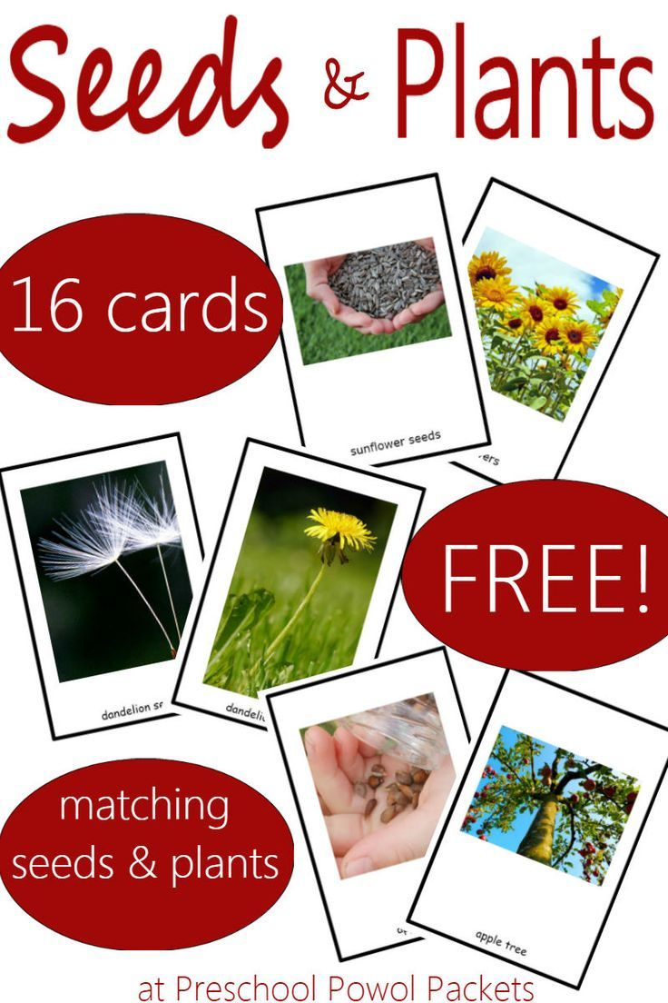 Fun game with awesome seed and plant matching cards! Which seeds grow into which plants? Perfect for preschoolers and older kids!