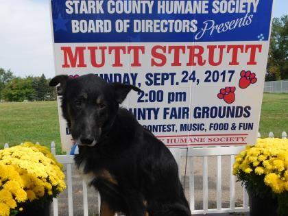 Gunner - URGENT SENIOR ALERT - Stark County Humane Society in Louisville, Ohio - ADOPT OR FOSTER - 8 year old Neutered Male German Shepherd Mix