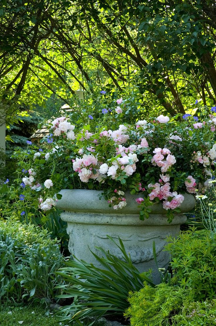 Holland park garden gallery brings in annuals from across ontario to - Flower Carpet Appleblossom Rose In Pot Flower Carpet Roses In A Container Garden