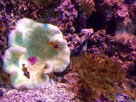 Fish and coral reef  Photo by Carl Christian Glosemeyer Andersen — National Geographic Your Shot