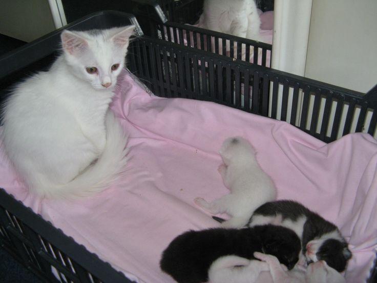 Puntii a nová miminka
