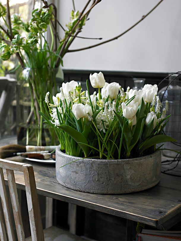 White Tulips, or any colour. An idea to have pots on the garden table. Then I can see them from the kitchen window