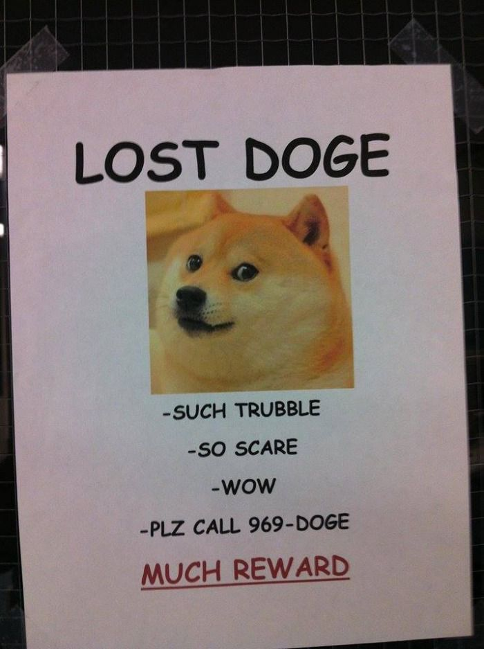 Lost Doge Doge Losing A Pet Doge Much Wow