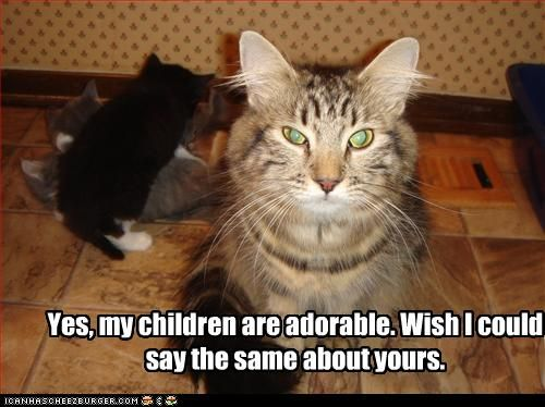 Cute Cat Pictures With Captions | funny pictures of cats ...