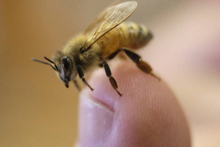 The widespread use of pesticides such as neonicotinoids is not only harmful to bees and other pollinators, but humans as well, scientists believe.