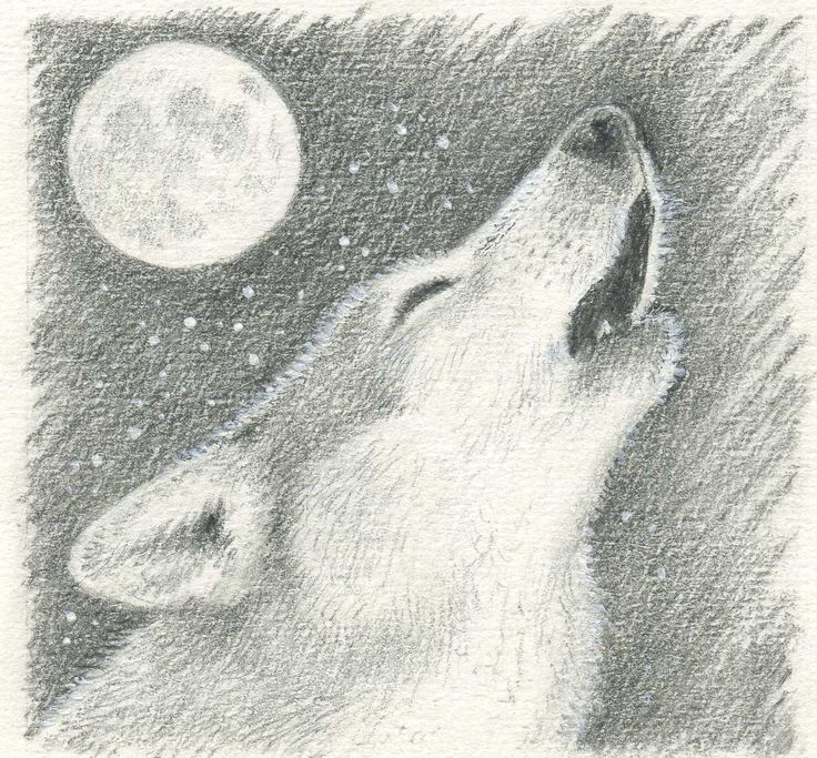 Drawn Google Search Wolf howling, Wolf howling at moon