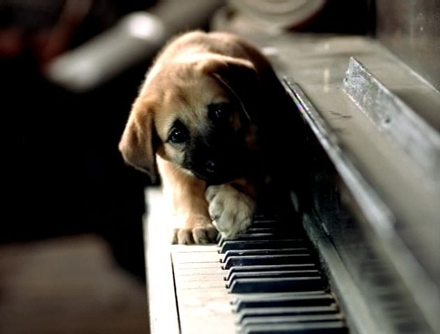 Puppies playing piano.  Dogs are somehow weirdly attracted to the piano.