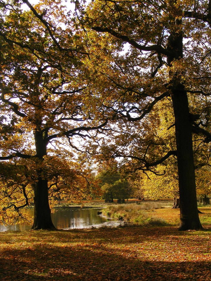 Park at Dunham Massey in autumn