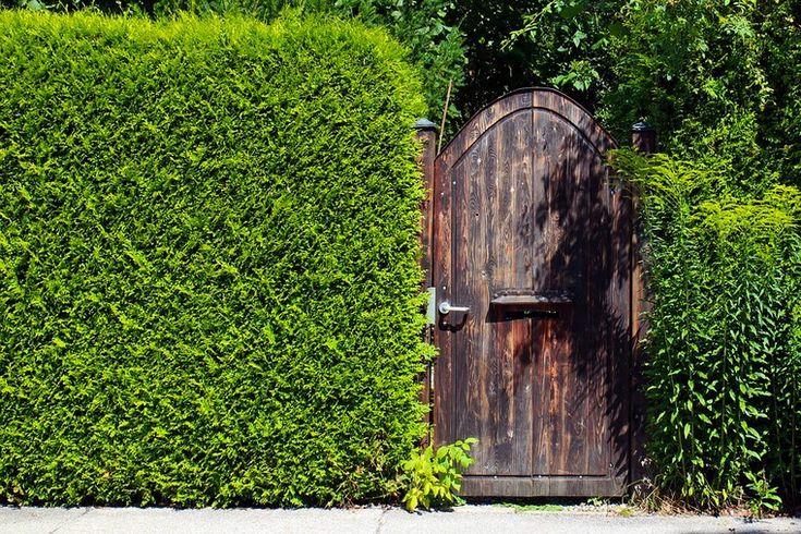 clôture de jardin pas cher diy idées haie végétale