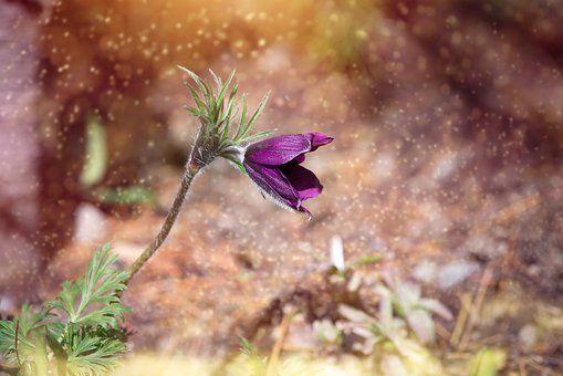 Anemoon, Bloem, Bloesem, Violet Inspiratie keramiek voor WWW.PETITARTISAN.BE