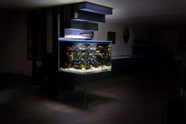 The light on the driftwood looks cool at night.    1500 litre custom made aquarium housing 40 African Malawi Cichlids. The aquarium is fully supported by glass, being the first of this kind in the world.