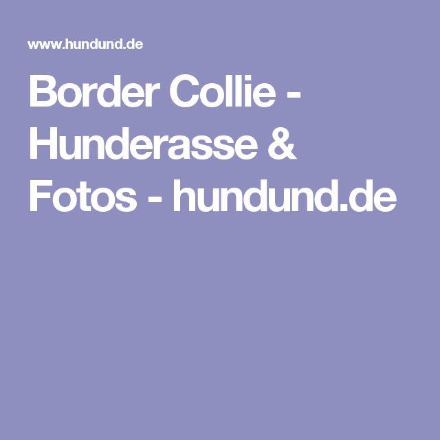 Border Collie - Hunderasse & Fotos - hundund.de