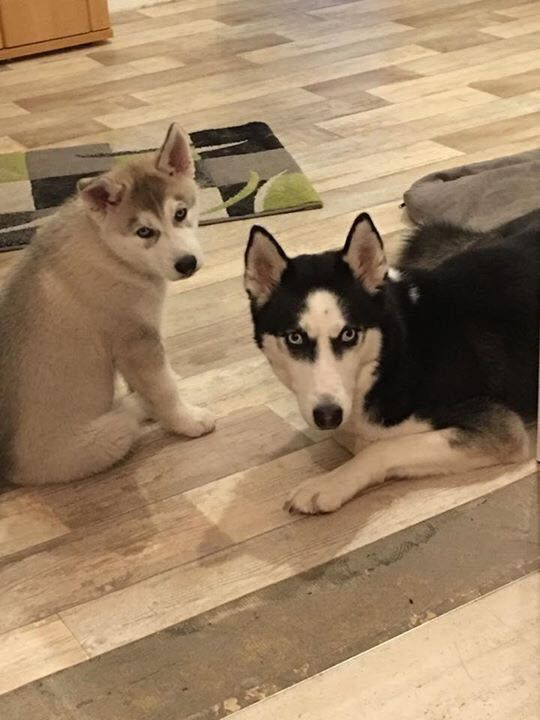 Hunde Foto: Jenny und Nala und Demon - Gesucht und Gefunden Hier Dein Bild hochladen: http://ichliebehunde.com/hund-des-tages  #hund #hunde #hundebild #hundebilder #dog #dogs #dogfun  #dogpic #dogpictures