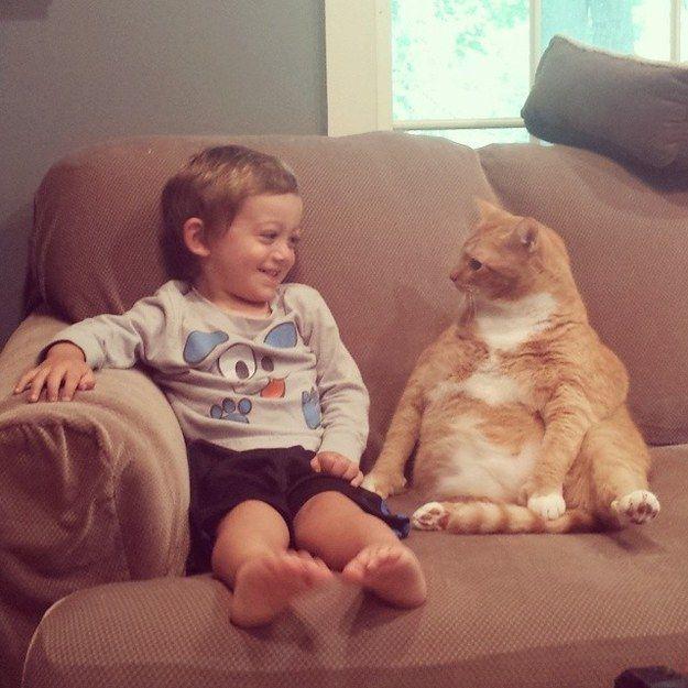 Ce chat et cet enfant en pleine discussion.