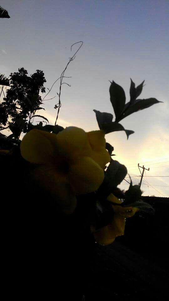 Flower in senaru