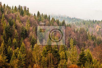 Fototapeta Jesienią lasów górskich Beskidu tle, Polska