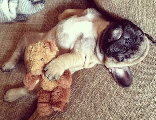 12 adorable sleepy animals who just can't let go of their furry friends