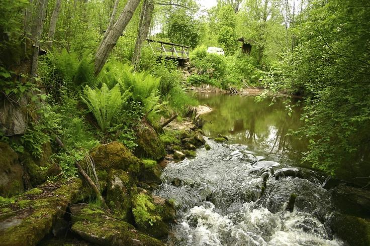 Porlande vatten och gröna skogar.