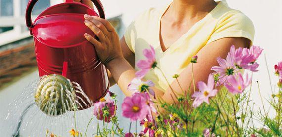 Qualunque siano i vostri programmi per questo weekend, non dimenticate di innaffiare le piante!!!! #piante #giardinaggio https://plus.google.com/108578285630840297665/posts/VK2ifEYxhH3