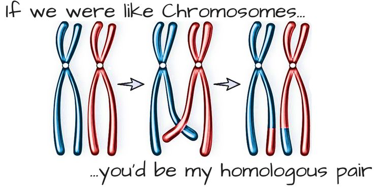 Science Pick Up Lines | Science pick-up lines - If we were like Chromosomes...you'd be my ...