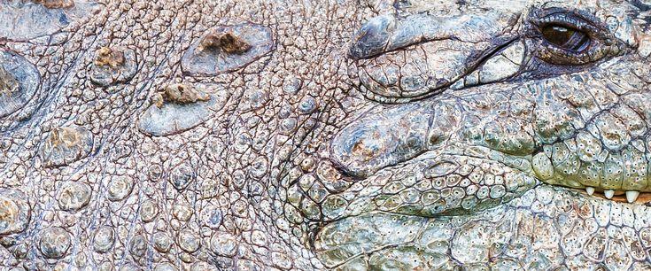 Living stone | #crocodile #cocodrilo #skin #piel #wrinkles #crinkles #arrugas