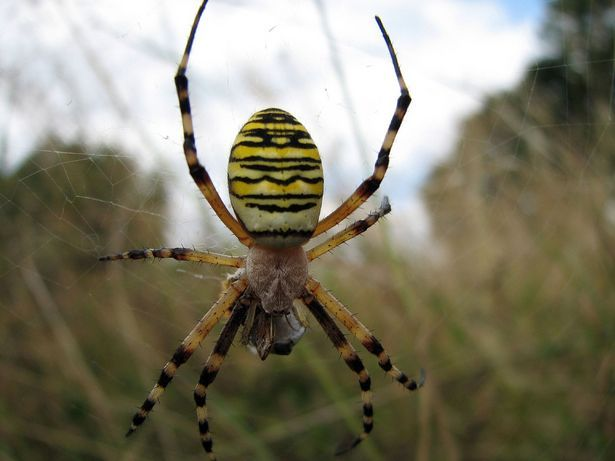 Keep this in mind if you start seeing lots of spiders around your place. Natural spider killer or prevention... take one cup of vinegar, one cup of pepper, a teaspoon of oil and liquid soap. Put it into a spray bottle and spray along the outside of your outside door and along windows;