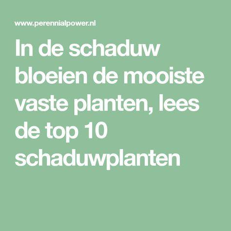 In de schaduw bloeien de mooiste vaste planten, lees de top 10 schaduwplanten