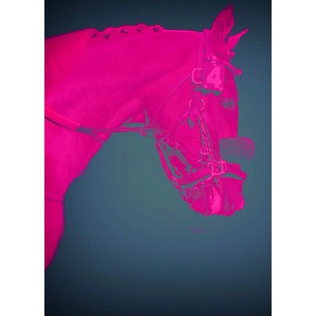 Pink horse love. Sourced via Pintrest . #equestrian #art #pony #horse #print #neon #polostyle #luxury #lifestyle #TPP #ThePoloProject #style #travel #lovepolo